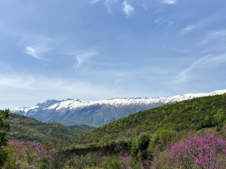 Snowy capped mountains in the background. In front are lush green trees and purple Spring blossom.